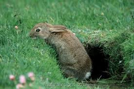 Animal in burrow image